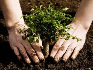 Plantar un árbol es la mejor forma para dejar huella ¿Cómo podemos mejorar nuestra huella ecológica?